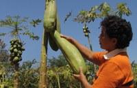 Le gouvernement du Nicaragua adopte Django pour la gestion de son agriculture